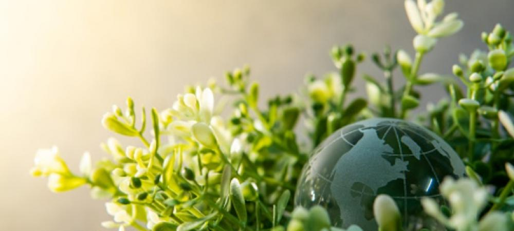 CFOs creating value: The sustainable way