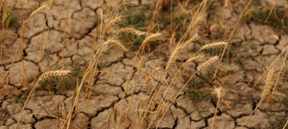 How should India manage its dietary patterns to tackle climate change